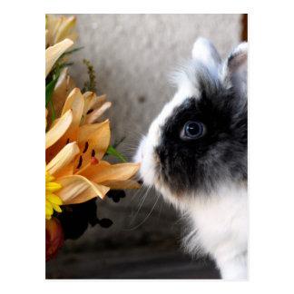 Black and white dwarf rabbit postcard