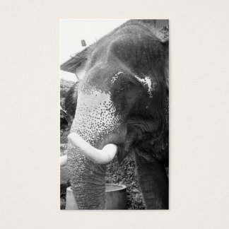 Black and White Elephant Business Card