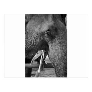 Black and white elephant photo postcard
