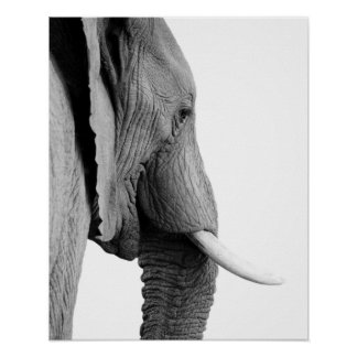 Black and white elephant wild african animal photo poster