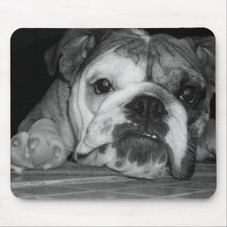 Black and White English Bulldog Puppy Mouse Pad
