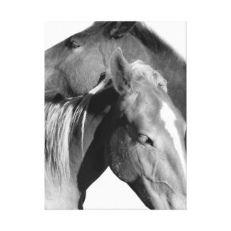 Black and white equestrian horse animal photo canvas print