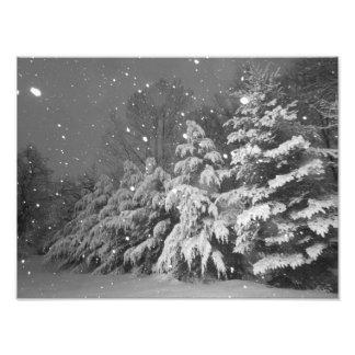 Black and White Evergreen Tree Snow Storm Photo Print