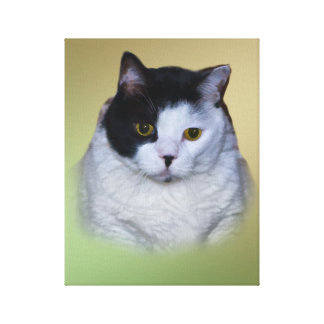 Black and White Fat Cat Canvas Print
