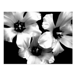 Black and White Floral Postcard