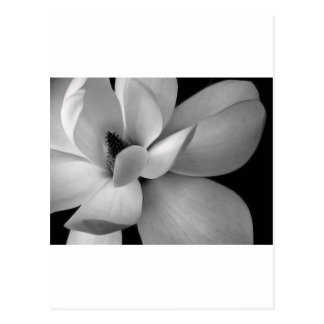 black-and-white-flower-7256-hd-wallpapers.jpg post cards