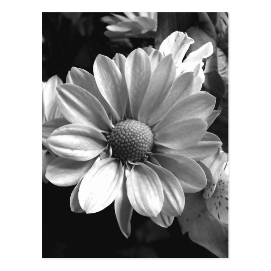Black and White Flower Photo Postcard