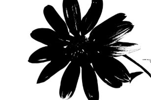 Black and white flower posters zazzle black and white flower poster mightylinksfo