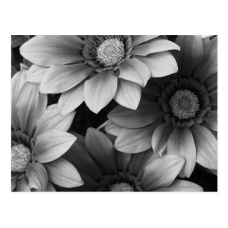 Black and white flowers postcard