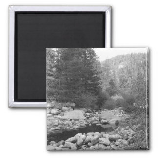 Black and White Forest Creek Magnet