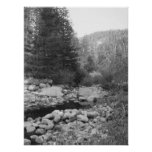 Black and White Forest Creek Poster