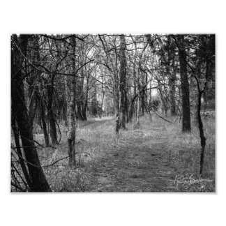 Black and White Forest Landsacpe Photograph