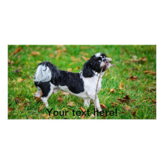 Black and white funny dog photo card template