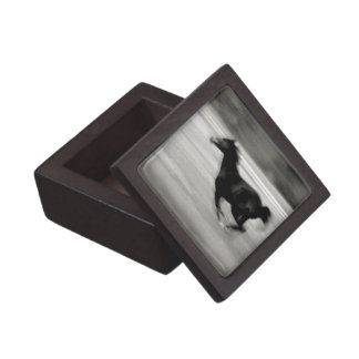 Black and White Galloping Horse Jewelry Box