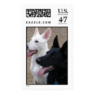 Black and White German Shepherds Postage Stamp