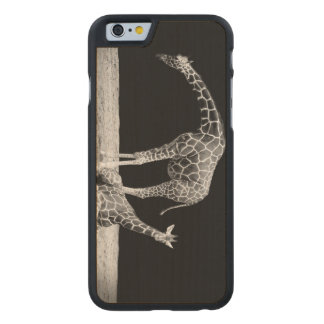 Black and White Giraffes Two Giraffes Carved® Maple iPhone 6 Case
