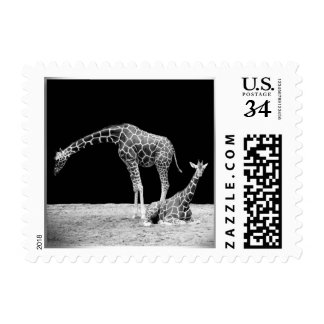 Black and White Giraffes Two Giraffes Postage Stamp