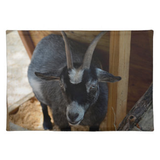 black and white goat under wood structure animal cloth placemat