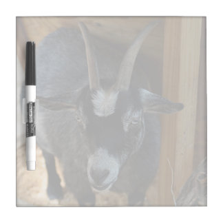 black and white goat under wood structure animal Dry-Erase boards