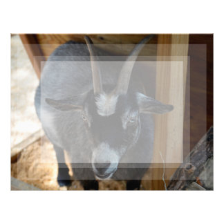 black and white goat under wood structure animal letterhead