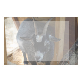 black and white goat under wood structure animal stationery