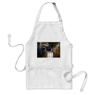 black and white goat with horns eating hay animal adult apron