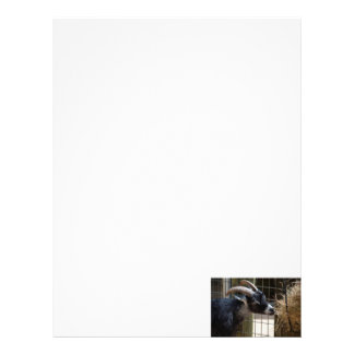 black and white goat with horns eating hay animal letterhead