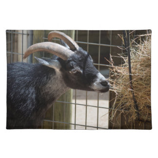 black and white goat with horns eating hay animal placemat