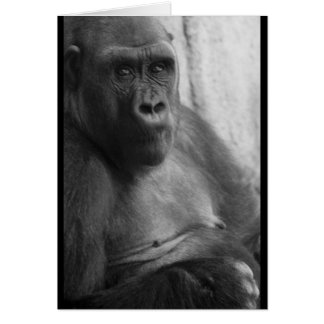 black and white gorilla photo card