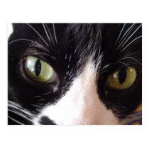 Black and White Green-Eyed Cat Postcard
