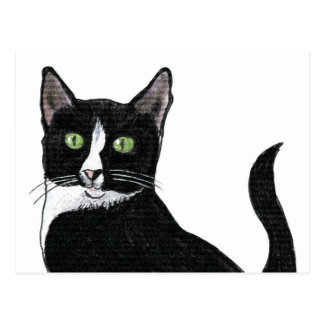 Black and White Green Eyed Cat Postcards