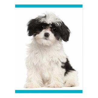Black And White Havanese Puppy Dog Postcard