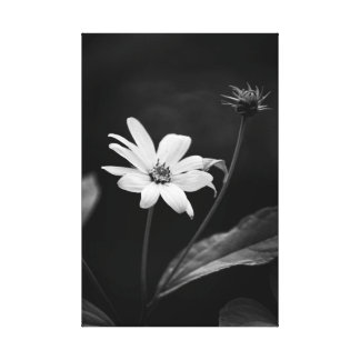 Black and White Heliopsis False Sunflower Dramatic Canvas Print