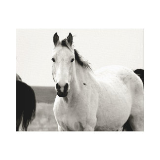 Black and white Horse in the Flint Hills Canvas Print