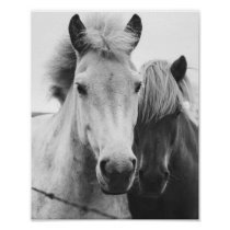 Black and white Horse photography Poster
