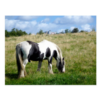 Black and White Horse / Pony Postcard