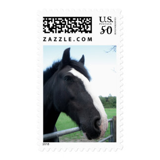 Black and White Horse Portrait Photograph - Medium Postage