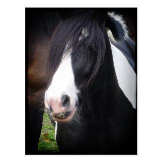 Black and White Horse Portrait Postcard