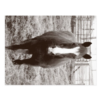 Black and white horse postcard
