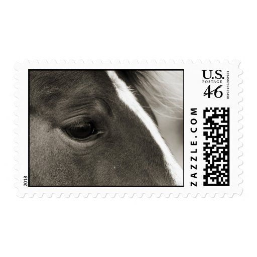 Black and White Horse's Eye pos days Stamp