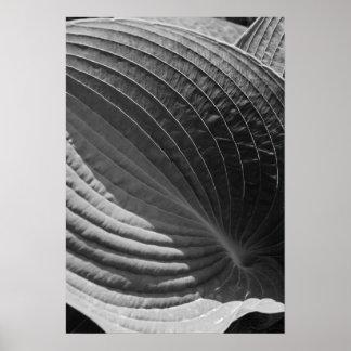 Black and White Hosta Leaf Poster
