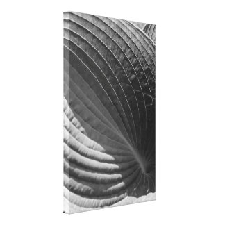 Black and White Hosta Leaf Wrapped Canvas Print