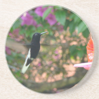 Black and White hummingbird flying at a feeder Coaster