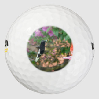 Black and White hummingbird flying at a feeder Golf Balls