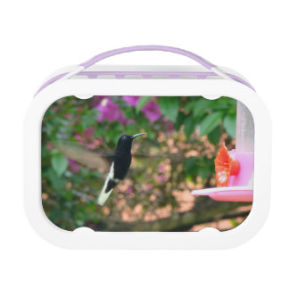 Black and White hummingbird flying at a feeder Lunch Box