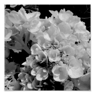 Black and White Hydrangea Floral Photography Print