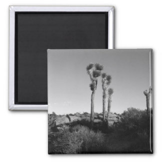 Black and White Joshua Tree 2 Inch Square Magnet