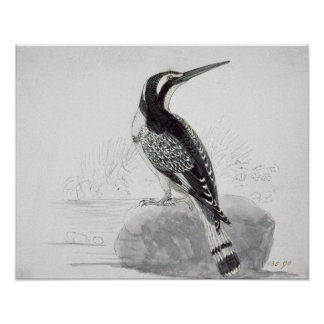 Black and White Kingfisher Poster