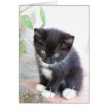 Black and White Kitten Greeting Card