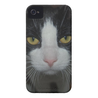 Black and White Kitten iPhone 4 Cover